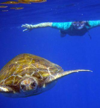 snorkel tortugas kayak delfines tenerife