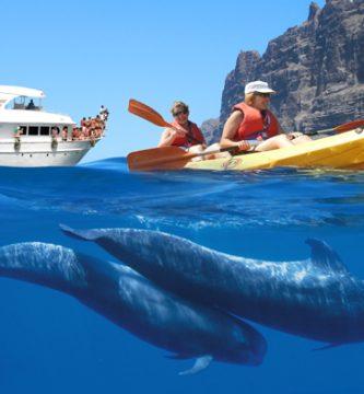 kayak avistamiento cetaceos los gigantes